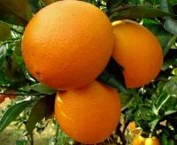 vitamin p Vitamin P for Skin Care
